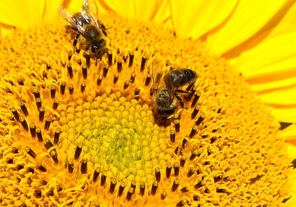 Eindhoven laat wilde bijenkaart maken