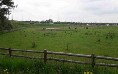 Bomenplan Milieudefensie Eindhoven maakt vorderingen